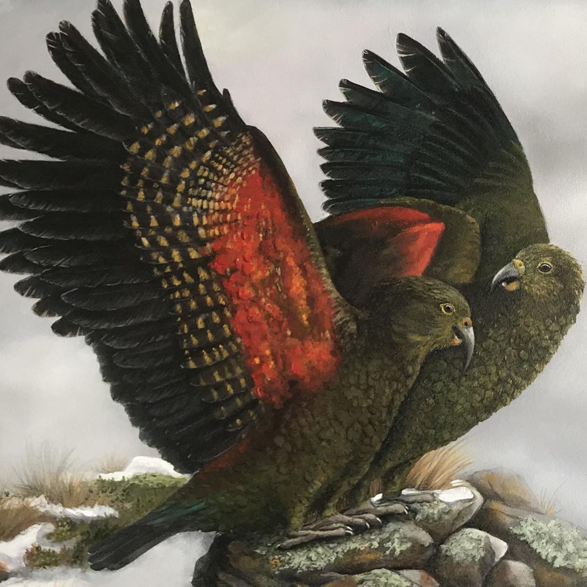 Mountain Monarchs - playful kea in the snowy mountain peaks - original artwork by Tania Jack
